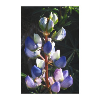 Flor blanca púrpura azul hermosa lienzo envuelto para galerias
