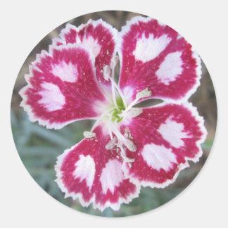 Flor blanca roja del clavel pegatina redonda