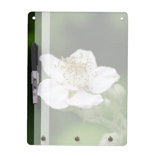 Flor blanca salvaje de la frambuesa tableros blancos
