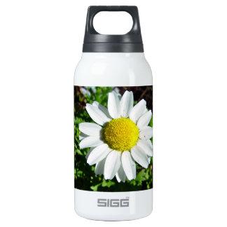 Flor blanca y amarilla de la margarita