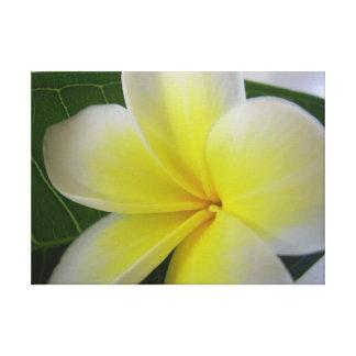 Flor blanca y amarilla del Frangipani Impresion En Lona