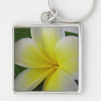 Flor blanca y amarilla del Frangipani Llavero