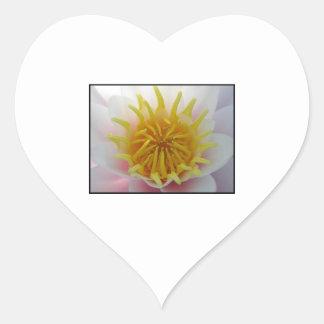 Flor blanca y amarilla pegatina en forma de corazón