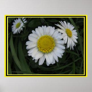Flor blanca y amarilla póster