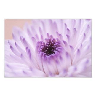 Flor blanca y púrpura impresion fotografica