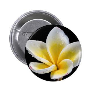 Flor blanco-amarilla hermosa del Plumeria Pin