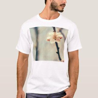 Flor blanco, árbol floreciente en primavera playera