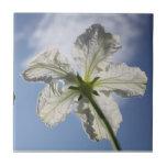 Flor blanco de la calabaza azulejos