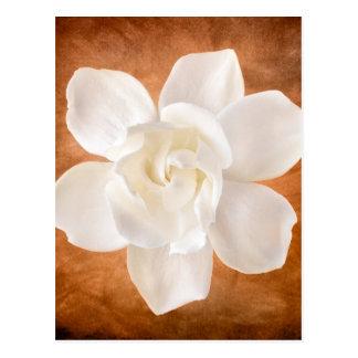 Flor blanco de la flor del Gardenia floral Postal