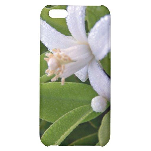 Flor blanco de la fruta cítrica del ed del rocío