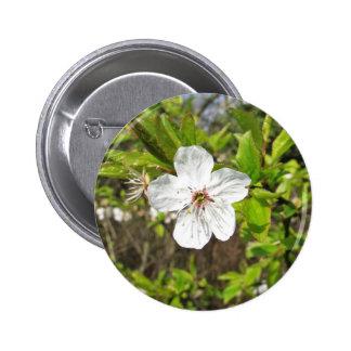 Flor blanco de la primavera