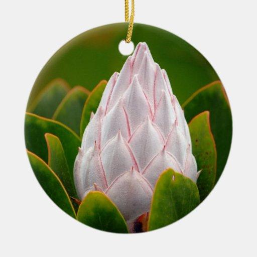 Flor blanco de rey Protea, ornamento del navidad Ornamentos De Navidad
