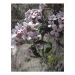 Flor blanco del árbol con una indirecta del rosa plantillas de membrete