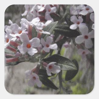 Flor blanco del árbol con una indirecta del rosa pegatina cuadrada