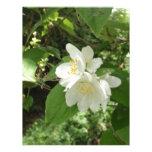 Flor blanco del árbol membrete a diseño