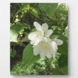 Flor blanco del árbol placas con fotos