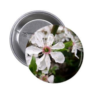 Flor blanco del endrino