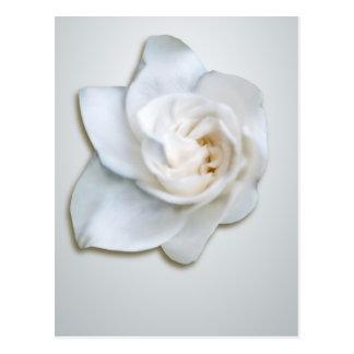 Flor blanco del Gardenia Tarjeta Postal