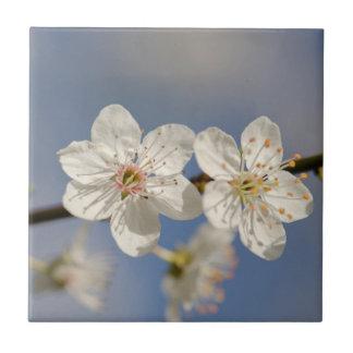 flor blanco en la teja del cielo azul