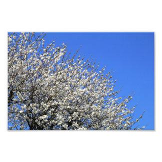 Flor blanco en un árbol fotografías