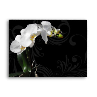 Flor blanco y negro dramática de la orquídea con r