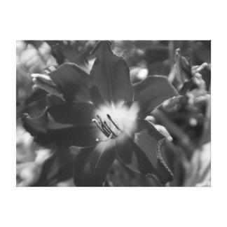 Flor blanco y negro lona estirada galerias