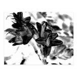 Flor blanco y negro postal