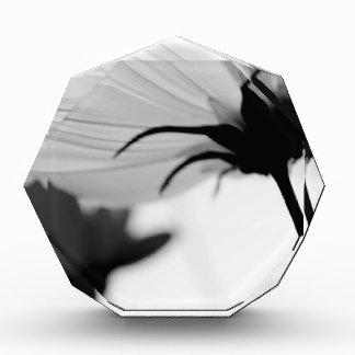 Flor blanco y negro