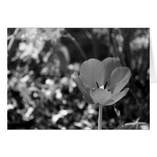 Flor blanco y negro tarjeton