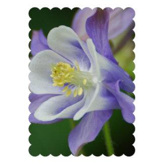 Flor bonita de Columbine