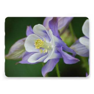 Flor bonita de Columbine Comunicados Personales