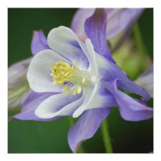 Flor bonita de Columbine Invitaciones Personalizada