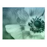 Flor bonita de la anémona postal
