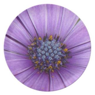 Flor bonita del jardín con los pétalos púrpuras plato para fiesta