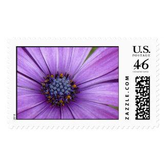 Flor bonita del jardín con los pétalos púrpuras