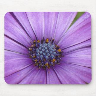 Flor bonita del jardín con los pétalos púrpuras alfombrilla de ratones