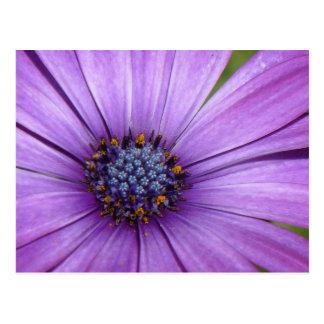 Flor bonita del jardín con los pétalos púrpuras tarjeta postal