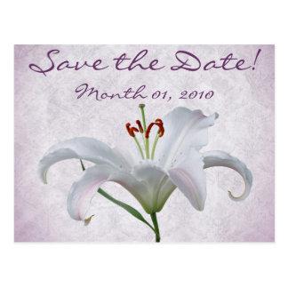Flor bonita del lirio blanco postal