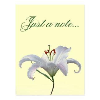 Flor bonita del lirio blanco tarjetas postales