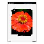Flor bonita del Zinnia iPad 3 Skins