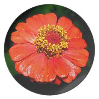 Flor bonita del Zinnia Plato Para Fiesta