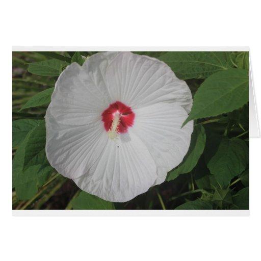 Flor brillante grande tarjeta de felicitación