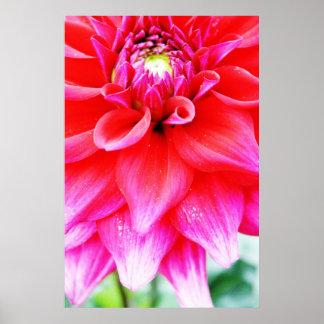 Flor brillante póster