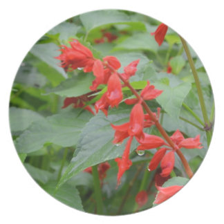 Flor cardinal platos