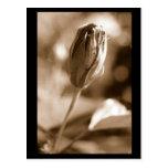 flor cerca de la floración tarjetas postales