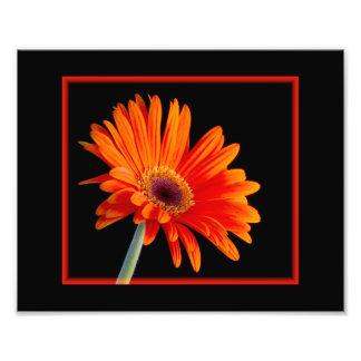 Flor cercana para arriba con la foto de la fronter