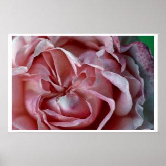 Flor cerrada poster