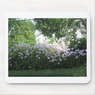 Flor CherryHill NewJersy NVN668 FU del jardín de l