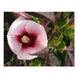 flor cojinete
