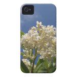 Flor color crema iPhone 4 cobertura